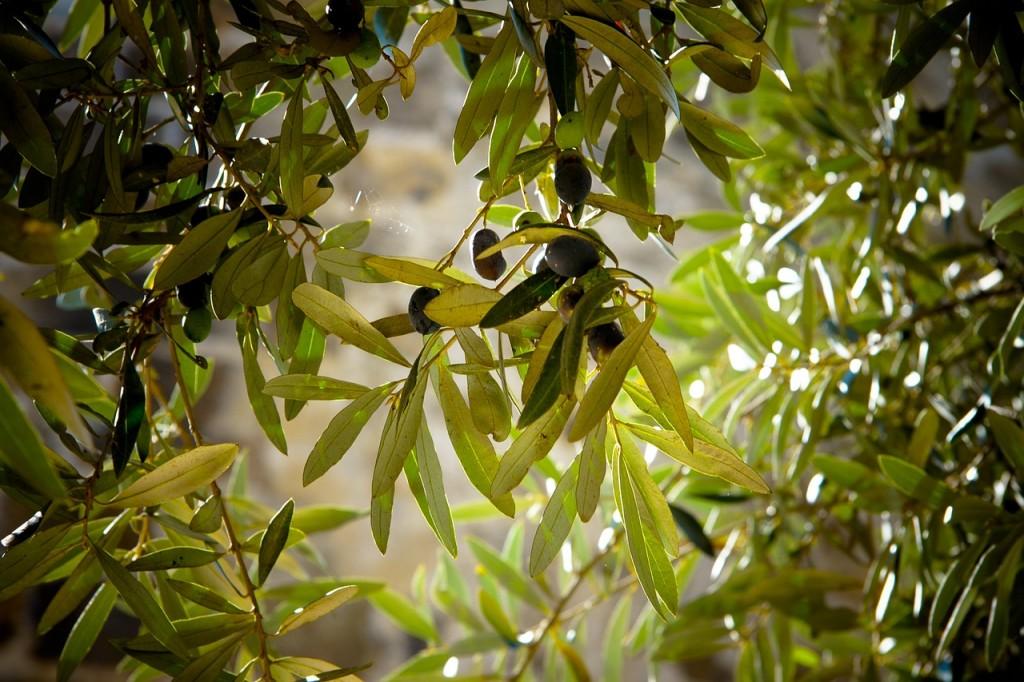 olives-789140_1280 (1)